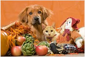 thanksgiving safety for your and cat mountain view