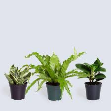 home collection buy online indoor plants collection u2013 the sill