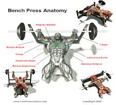 decline bench press muscles master your benchpress technique