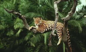 10 species that hug trees stories wwf