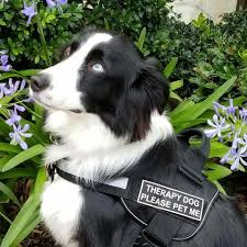 therapy dogs comfort grieving families at funeral homes