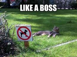 Grass Memes - like a boss boss cat grass quickmeme