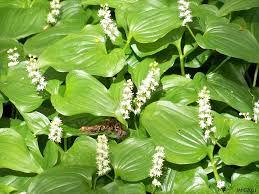 north carolina native plants types of plants with names darxxidecom