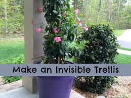 make an invisible trellis for a climbing plant youtube
