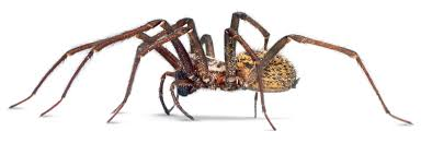 types of spiders spider facts for kids dk find out