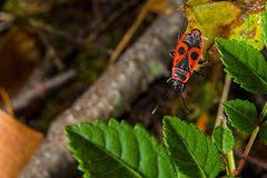 kasten ältest wanzen auf haus stockfoto bild kasten ältere wanze insekten wanzen stockfoto bild sonnen sonne