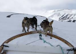 take a wild dog sled ride with green dog in spitsbergen travels