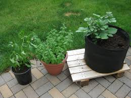 the garden experiment sustainable organic and native gardening