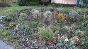 resource library 12 000 rain rain gardens in your county rain gardens washington state