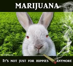 Funny Rabbit Memes - stoner bunny weed not just for hippies anymore weed memes