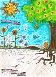 pollinator curriculum u2014 beyond pesticides