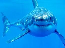 shark sightings shut down cape cod beaches cbs news