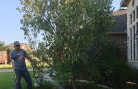 discount trees of brenham brenham tx 77833 yp