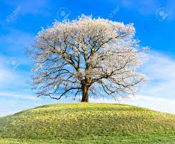 frosty tree at the top of the hill stock photo picture and