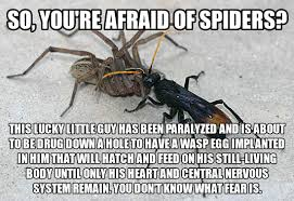 I Saw A Spider Meme - letters from a spider lover