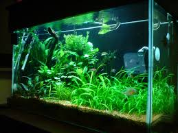 inspiring fish tank idea gallery design ideas 6755