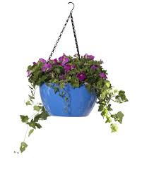 hanging flowers viva self watering hanging basket hanging flower baskets