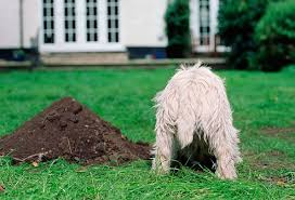 your dog u0027s digging once and for all