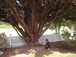 tree photos photographs of trees pruning cutting bark trunks