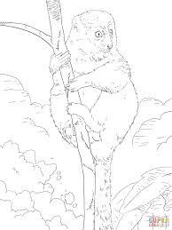 lemur coloring page getcoloringpages com