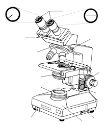 light microscopy clipart binocular microscope pencil and in