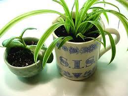 plantes d駱olluantes chambre les plantes dépolluantes quelle pièce pour quelle