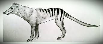 tasmanian tiger sketch by twistedxvision on deviantart