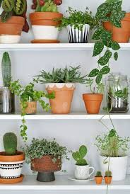 plants at home 99 great ideas to display houseplants plants house and houseplants