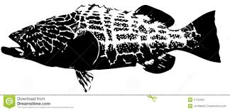 grouper clipart black and white pencil and in color grouper
