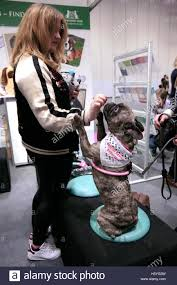 discover the hair show london uk 22 october 2016 the eukanuba discover dogs show open its