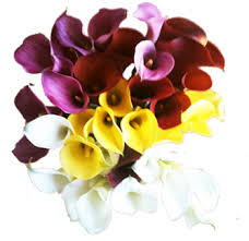 flower wholesale fresh cut wholesale flowers online for sale