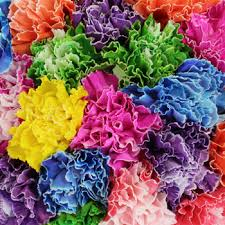 flowers wholesale dyed wholesale carnation flowers