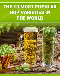 growing hops at home how to grow hops