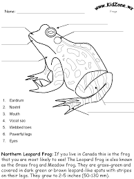 frog anatomy worksheet fioradesignstudio