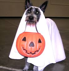 Ghost Dog Halloween Costumes Minute Dog Halloween Costumes Woof Report Email