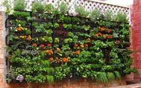 garden vegetables to plant best idea garden