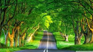 backgrounds most beautiful nature scenes ever green amazing world