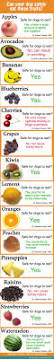 best 25 dog nutrition ideas on pinterest carrots for dogs