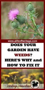 Garden For Family Of 4 25098 Best Homesteading Images On Pinterest