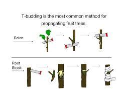 plant propagation methodologies