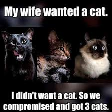 Meme Creators - cat paw prints meme creators online timer