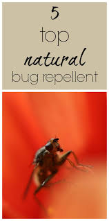 Small Red Bugs On Patio by 25 Unique Natural Bug Repellant Ideas On Pinterest Insect
