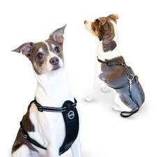 Four Paws Comfort Control Harness Pet Harness Dog Collars Harnesses U0026 Leashes Target