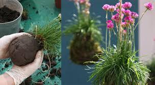 deco jardin a faire soi meme jardin suspendu comment faire un kokedama prima
