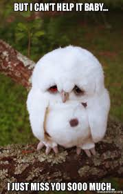 Sad Baby Meme - but i can t help it baby i just miss you sooo much sad owl