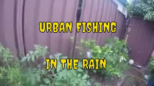 have you ever wondered where fish go in the rain i found bream in