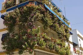 flowers for balcony gardens