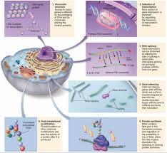 Inverted Living Control Of Gene Expression Part Ii U2014 Steemit