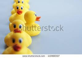 duck stock images royalty free images u0026 vectors shutterstock