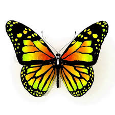 free yellow butterfly isolated butterfly of